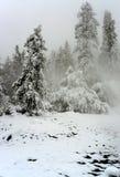 Yellowstone Winter Snow Royalty Free Stock Photography