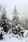 Yellowstone Winter Snow Stock Photography