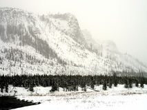 Yellowstone Winter Snow Royalty Free Stock Photography