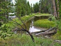 Yellowstone, Wyoming Stock Image