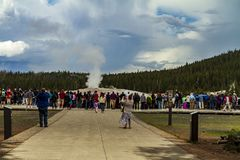Old faithful geyser inside Yellowstone stock photography