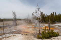 Yellowstone, Wyoming, USA Stockbilder