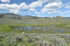Yellowstonemeditatie Stock Foto's