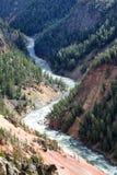 Yellowstonerivier die door zijn canion op de recente zomer DA winden Stock Afbeeldingen