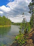 Yellowstonerivier die terug naar Yellowstone-Meer kijken royalty-vrije stock foto