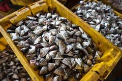 Yellowstripe大量鱼头裁减和保留在桶做肥料或牛在湄公河三角洲的食物,在越南南部 图库摄影