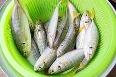 Yellowstripe-Scadfische Lizenzfreie Stockbilder