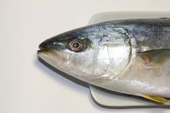 Yellowtail κεφάλι ψαριών Στοκ εικόνες με δικαίωμα ελεύθερης χρήσης