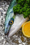yellowtail Στοκ εικόνες με δικαίωμα ελεύθερης χρήσης