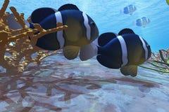 Yellowtail Clownfish stock illustratie