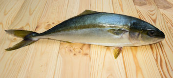 Yellowtail fish on wooden boards Stock Photography