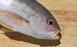 Yellowtail Snapper on cutting board Royalty Free Stock Photography