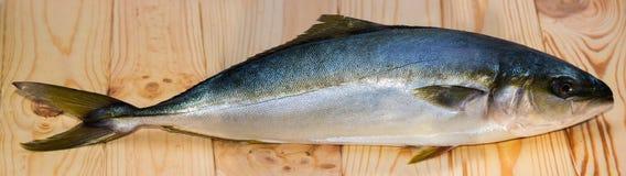 Yellowtailfisk på träbräde Arkivbild