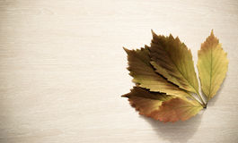 Yellowy-brown leaf of grapes in a corner of a light wooden board Royalty Free Stock Photos