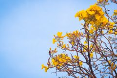 Yelloyellow flowers blossom in spring sumw flowers blossom in spring summer bluer sky background lively season holday concept idea. Yellow flowers blossom in stock photos