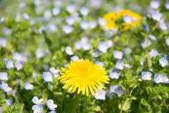 Yelow花,美丽的自然春天庭院 免版税库存图片