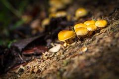Yelow蘑菇在森林里 免版税图库摄影