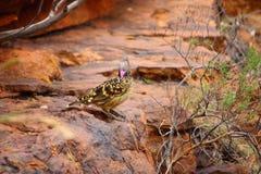 Yelow and black bird Royalty Free Stock Photos