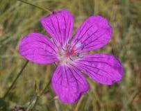 Yelow blomma Arkivfoto