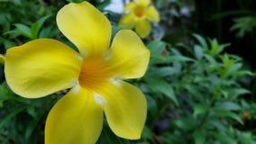 Yelow Blume Stockbilder