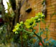 Yelow de fleur Image libre de droits