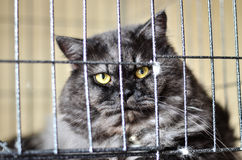 Yelow eye. Cat yelow eye   Cat in box Royalty Free Stock Photo