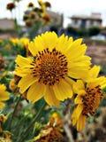 Flora. Yelow flora green landscap leaf sky Royalty Free Stock Images
