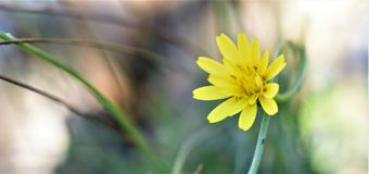 Yelow flower blurry background stock images