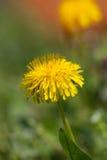 Yelow  flower close up Stock Photos