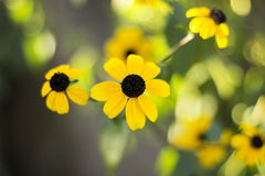 Yellow flowers. Close up. yelow flowers on green background Stock Photo