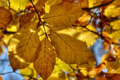 Yelow leaves stock photography