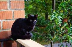 Yelow und blaue Farbaugen Schwarze und schöne Katze Nica, Lettland lizenzfreies stockbild