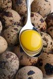 Yema de huevo en cuchara Imagen de archivo libre de regalías