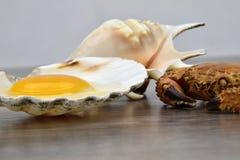 Yema de huevo y albumen Egg en cáscaras del mar en el fondo de madera Cangrejo y conchas de peregrino imagenes de archivo