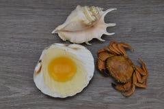 Yema de huevo y albumen Egg en cáscaras del mar en el fondo de madera Cangrejo y conchas de peregrino imágenes de archivo libres de regalías