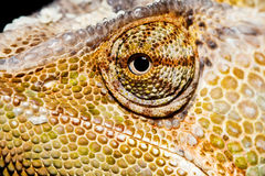 Yemen Chameleon eye. Mcro photograph of a yemen chameleons face Stock Photography
