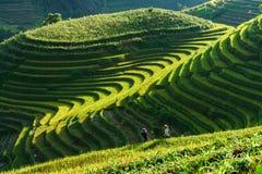 Yen Bai, Vietnam - 18 Sep, 2017: Terrasvormig padieveld in oogstseizoen met etnische minderheidvrouwen op het gebied in Mu Cang C Stock Foto's
