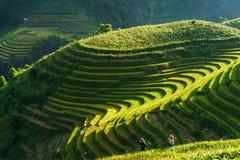 Yen Bai Vietnam - September 18, 2017: Terrasserad risfält i skördsäsong med kvinnor för etnisk minoritet på fältet i Mu Cang Chai arkivfoto