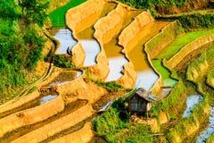 YENBAI,越南- 2014年5月18日-从山的峰顶观看的露台的领域的秀丽 免版税库存照片