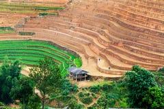 YENBAI, VIETNAM - 19 maggio 2014 - agricoltori etnici che lavorano ai campi Fotografie Stock