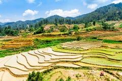 YENBAI VIETNAM - MAJ 18, 2014 - etniska bönder som planterar ris på fälten Arkivbild