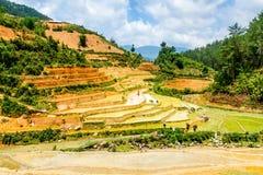 YENBAI VIETNAM - MAJ 18, 2014 - etniska bönder som planterar ris på fälten Royaltyfri Foto