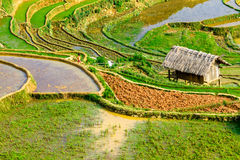 YENBAI, VIETNAM - MAY 18, 2014 - Beauty of the terraced fields viewed from the peak of a mountain. Royalty Free Stock Photography