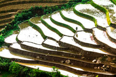 YENBAI, VIETNAM - MAY 19, 2014 - Beauty of the terraced fields viewed from the peak of a mountain. Royalty Free Stock Photography