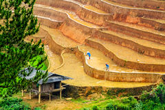 YENBAI, VIETNAM - MAY 19, 2014 - Ethnic farmers working on the fields Stock Photo