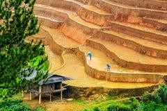 YENBAI, VIETNAM - MAY 19, 2014 - Ethnic farmers working on the fields Stock Photo