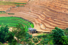 YENBAI, VIETNAM - MAY 19, 2014 - Ethnic farmers working on the fields Stock Photos