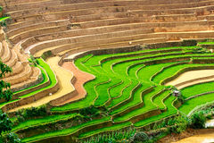 YENBAI, VIETNAM - MAY 19, 2014 - Newly planted rice terraces Royalty Free Stock Photos