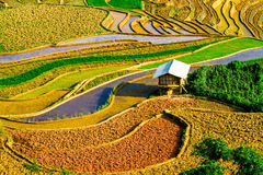 YENBAI, VIETNAM - MAY 19, 2014 - Nice curves of the terraced fields Stock Photos