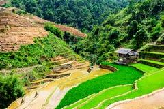 YENBAI, VIETNAME - 16 de maio de 2014 - vista dos terraços dos fazendeiros étnicos na estação de enchimento da água fotos de stock royalty free